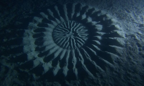 Natural Wonder: Mysterious Underwater Circle Used for Mating picture