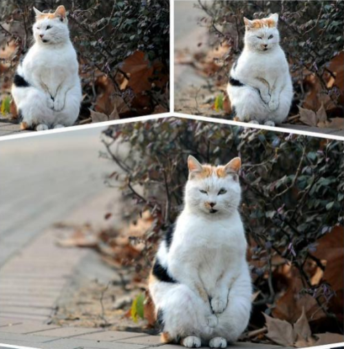 Viral Video Superstar, the Masturbating Cat, May Really Be in Pain: Netizens picture
