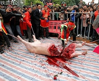 Live Pig Chopped into Halves in Rural Vietnam Festival (Graphic) picture