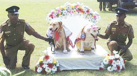Sri Lankan Dog Wedding Sparks Strong Feelings picture