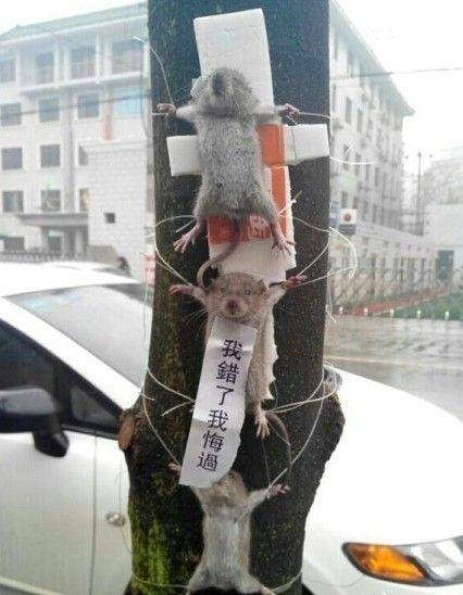 Three Mice Cause Online Stir in China  picture