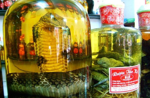 Bottled Snake Preserved in Alcohol Bites Woman picture