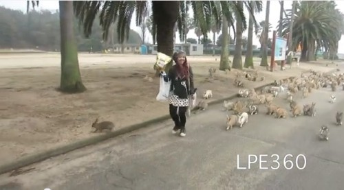 Girl Chased by Hundreds of Rabbits picture