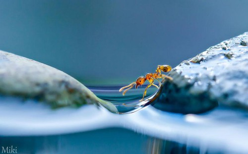 Japanese Photographer Takes You to the Small World of Nature picture