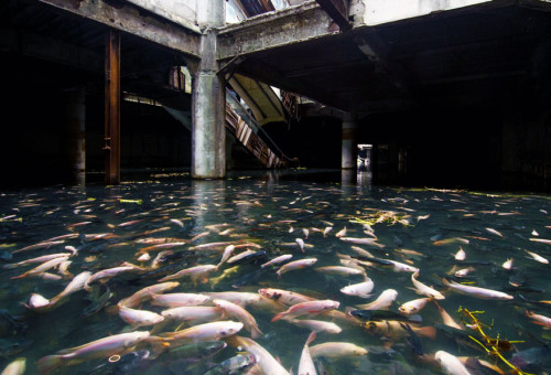 Abandoned Mall in Bangkok Turned into Large Aquarium picture