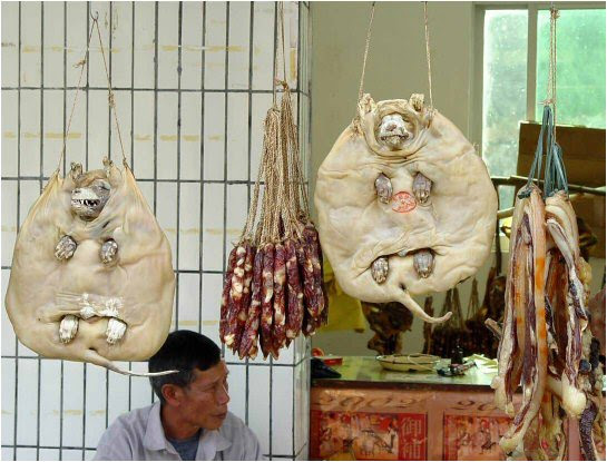 Do They Still Eat Dogs In China
