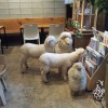 TN-Sheep-with-Sheep-Toys