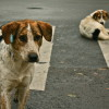 stray dogs on the street