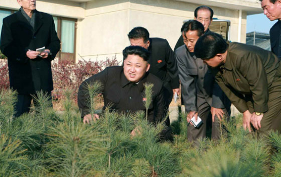 Kim Jung-un Loves Trees and the Execution of Officials