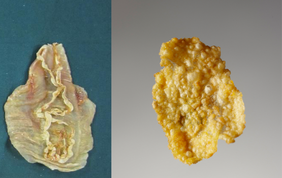 Fish Bladder Corn Flakes Are Not the Breakfast of Champions