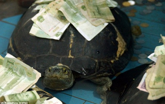 Visitors Making It Rain Cash On Turtles At The Zoo